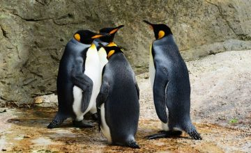 Have you ever spoken to a penguin?