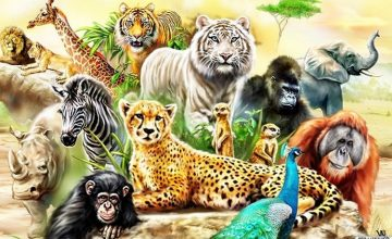 What animal would you be?
